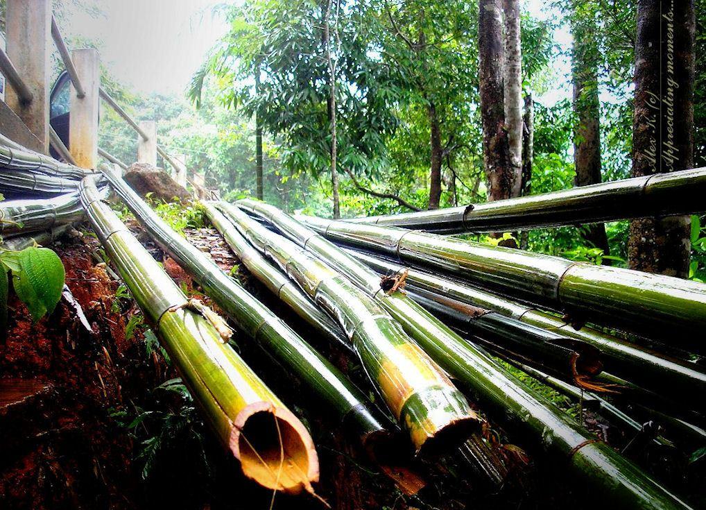 лежит бамбук