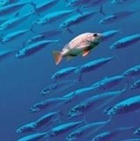 рыба плывет против течения