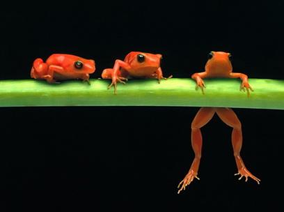 три лягушки на бревне