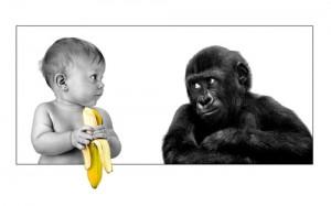 эксперимент с обезьянами